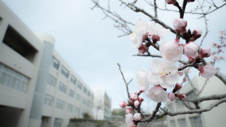 学歴コンプレックスを感じて春を迎えた方へ